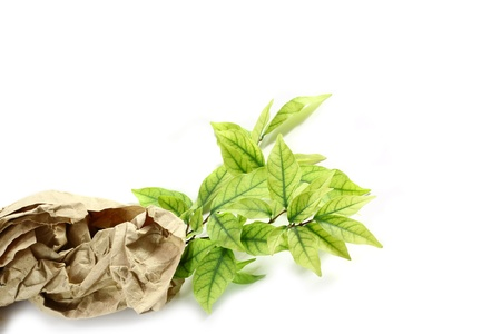 Ecology concept. small plant in recycled paper on white background  photo