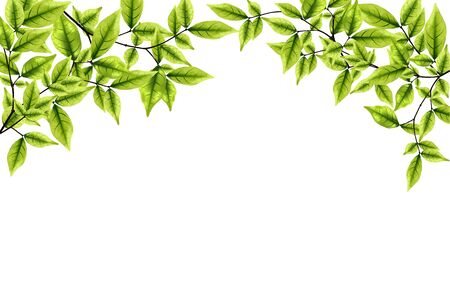 fresh green leaves background -  illustration Stock Vector - 14652709