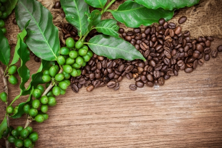 coffee plant: Coffee beans over wood background, Macro close-up for design work