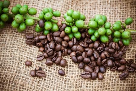 ejotes: Los granos de caf� sobre fondo de madera, Macro close-up para el trabajo de dise�o