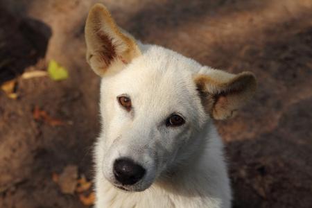 solter�a: perro triste mirando impotente a la c�mara