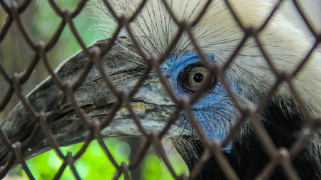 constrain: An eye of a hornbill behind the cage Stock Photo