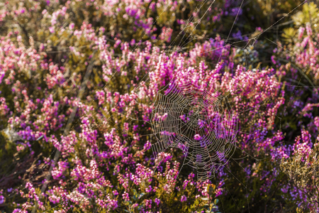 Marsh Latvia.Dunikas early in the morning at sunrise Reklamní fotografie