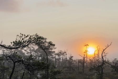 desert ecosystem: The sun Latvia.Dunikas swamp and mist rises