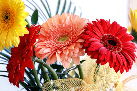 Very beautiful, colorful flowers on white background