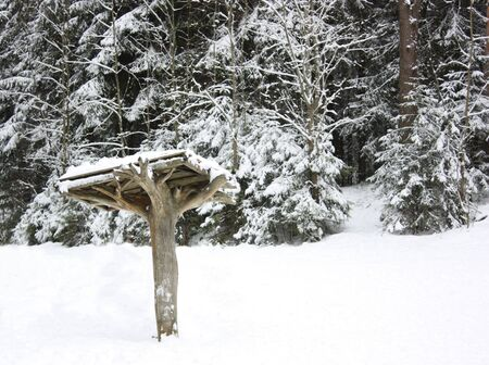 Snow-covered canopy in the winter forest photo