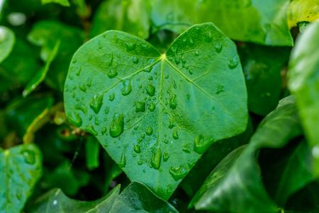 detai: Rain between seasons