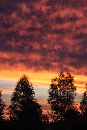 Il cielo è pieno di nuvole ma puoi comunque vedere il tramonto attraverso gli alberi. Archivio Fotografico - 82482907