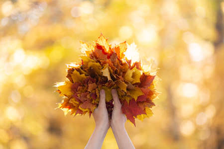 Gold fall symbol. Atmosphere bouquet of multicolor maple leaves in female hands in the forest blur background, selective focus