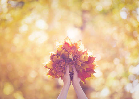 Bouquet of yellow, red and orange maple leaves in human hands in the forest in haze. Blur autumn background, selective focus