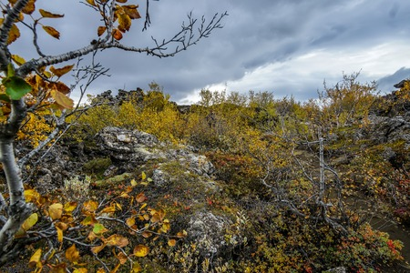 Autumn colours at the Dimmuborgir lava fields near Myvatn in the north of Iceland Imagens