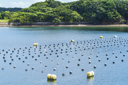 Pearl rows in the ocean, production and cultivation of pearls in the ocean. Pearl aqua farming cultivation Shima Japan.