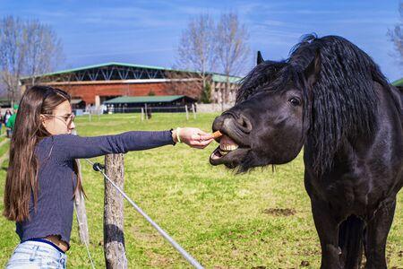 Un caballo come de la mano de una niña, una niña alimenta a los caballos en la granja en un día de verano. La niña joven alimenta a su caballo de su mano.