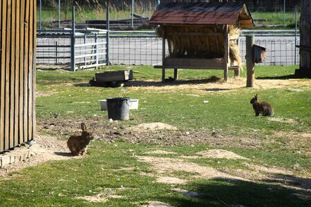 Cute various colors of little rabbits in a farm