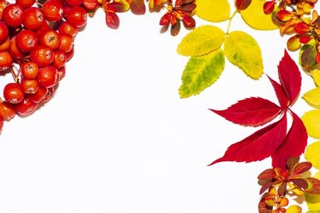 Autumn background. Leaves of different colors.