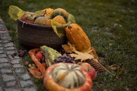 Autumn background of multi-colored decorative pumpkins.Multi-colored pumpkins in the garden. Halloween preparation.