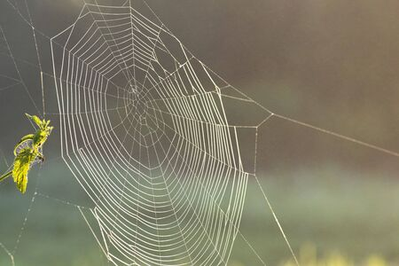 Thin transparent web on a bush on a sunny summer day. Close-up view.The spider weaved a web.