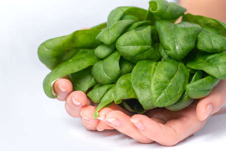 Green leaves of young spinach in the hands of the girl. Super food, green food, healthy food.healthy eating, dieting, vegetarian food and people concept - close up of woman hands holding spinach at home. Imagens