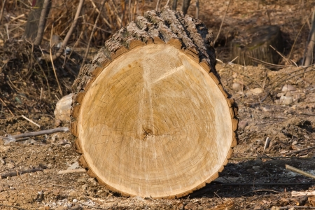 slits: cut tree trunk with tree rings and slits. Stock Photo