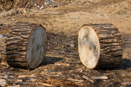 balk: Two sawn tree trunk with tree rings