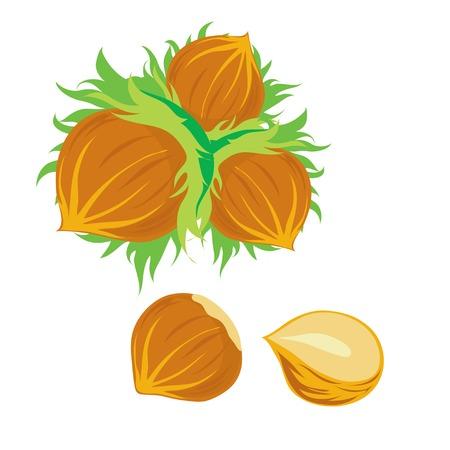 avellanas: Ilustraci�n de los frutos secos