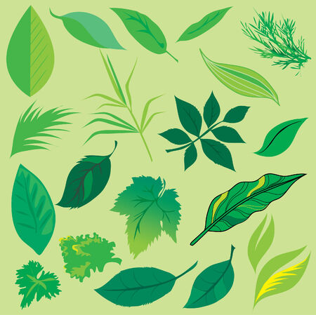 chit: Set of leafs design elements