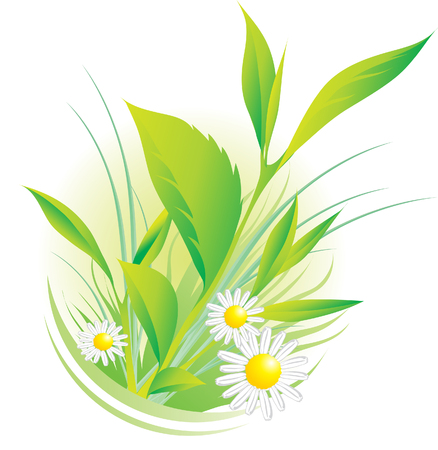 botanics: Vector illustration of natural plants and chamomile