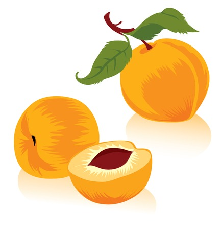Illustration of peaches Vector