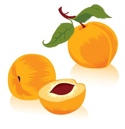 Illustration of peaches Vector