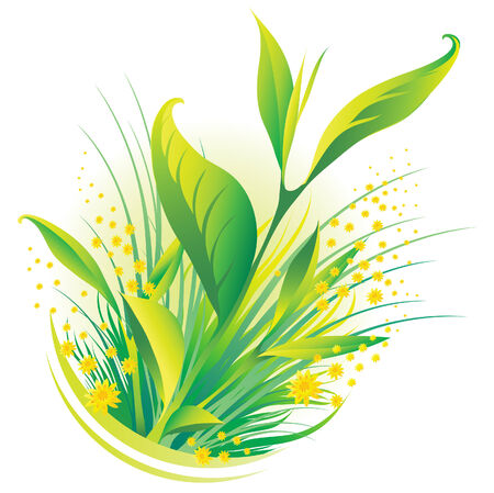 Vector illustration of natural plants and flowers Vector