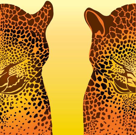 rapacious: leopard