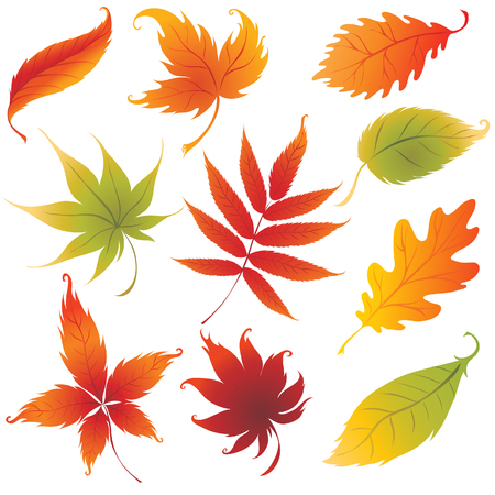 Set of vector colorful autumn leaves design elements. Thanksgiving Vector