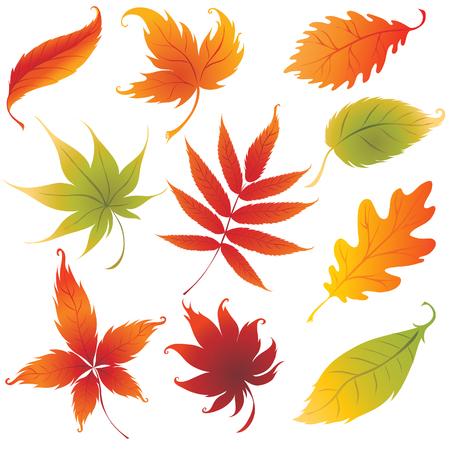 Set of vector colorful autumn leaves design elements. Thanksgiving Illustration