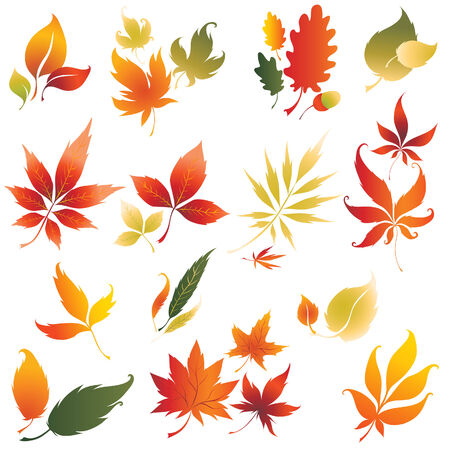 Set of vector colorful autumn leafs design elements 2. Thanksgiving Illustration