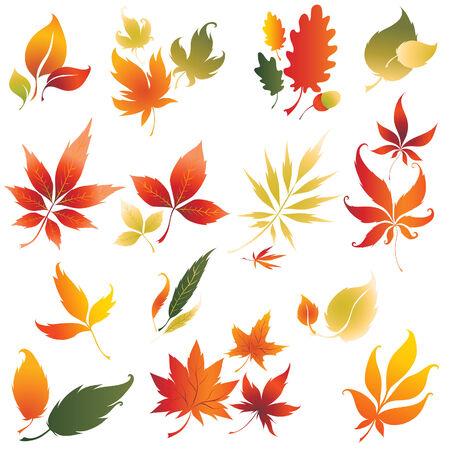 elm: Set of vector colorful autumn leafs design elements 2. Thanksgiving Illustration