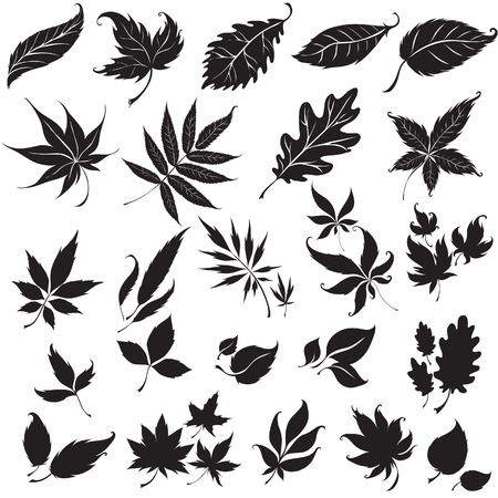 Set of black floral design elements (from my Stock Vector - 6199115