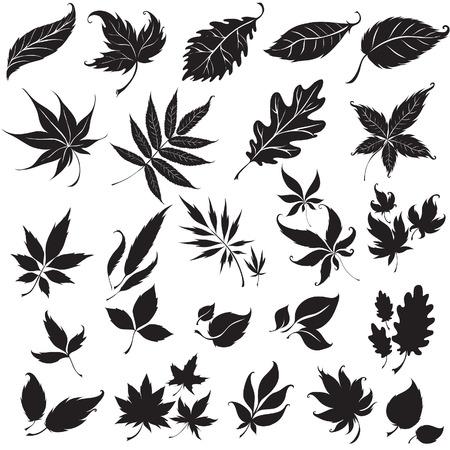 Set of black floral design elements (from my  Illustration
