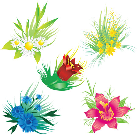 cornflower: Set of floral design elements