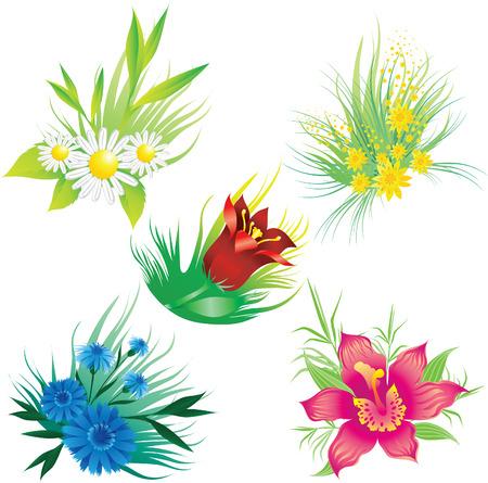 garden cornflowers: Set of floral design elements