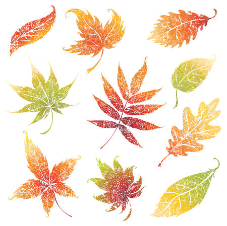 set of autumn grunge leafs - design elements. Thanksgiving Stock Vector - 7494955