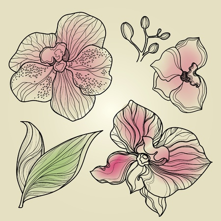 orchid tree: Set of floral orchid design elements