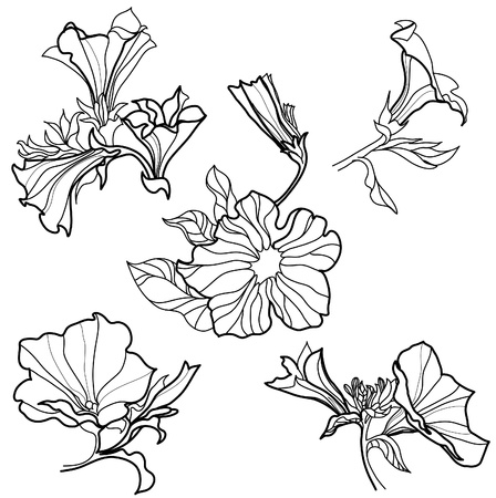 brie: Vector set of bell-flowers design elements