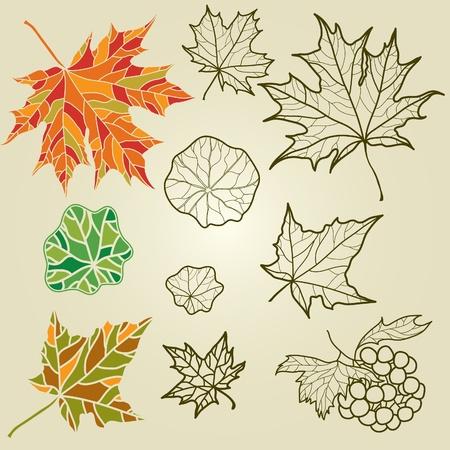 Conjunto de vectores de otoño leafs - elementos de diseño. Acción de gracias Ilustración de vector