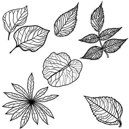 Set of autumn leafs - design elements. Thanksgiving Stock Vector - 10134315