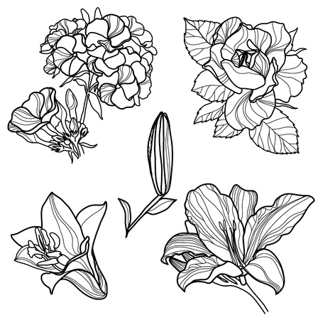 rose bush: Set of floral design elements