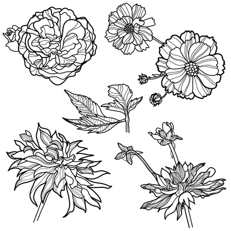peony black: Set of floral design elements (from my big