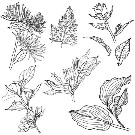 花のデザイン要素 (から私大きな花セット collectionなど) のセット  イラスト・ベクター素材