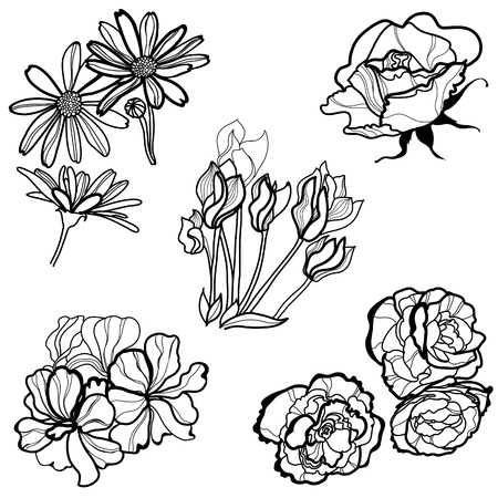lilly: Set of floral design elements -  flowers