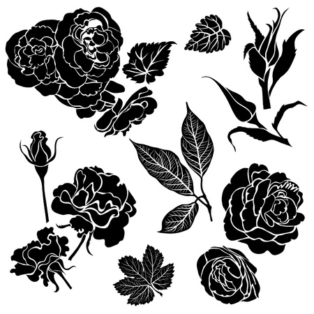 rose bush: Set of black floral design elements - rose flowers