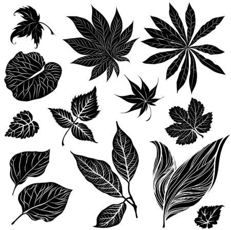 brie: Vector set of black floral design elements - leafs Illustration
